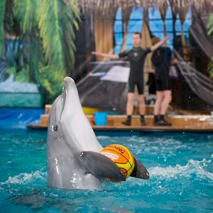 Дельфинарии, океанариумы Новоспасского