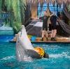 Дельфинарии, океанариумы в Новоспасском